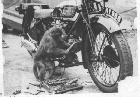 douglas-monkey